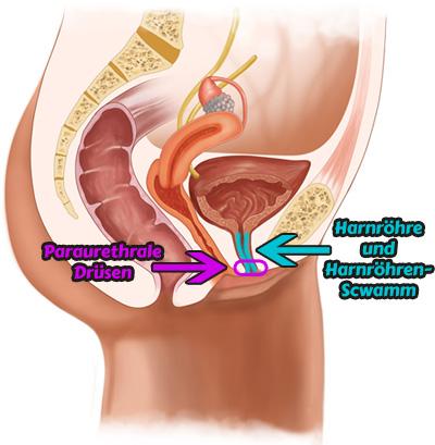 Anatomisches Bild